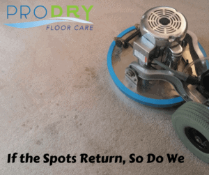 Top Rated Carpet Cleaning Services in Loveland