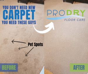 Professional Carpet Cleaning Services